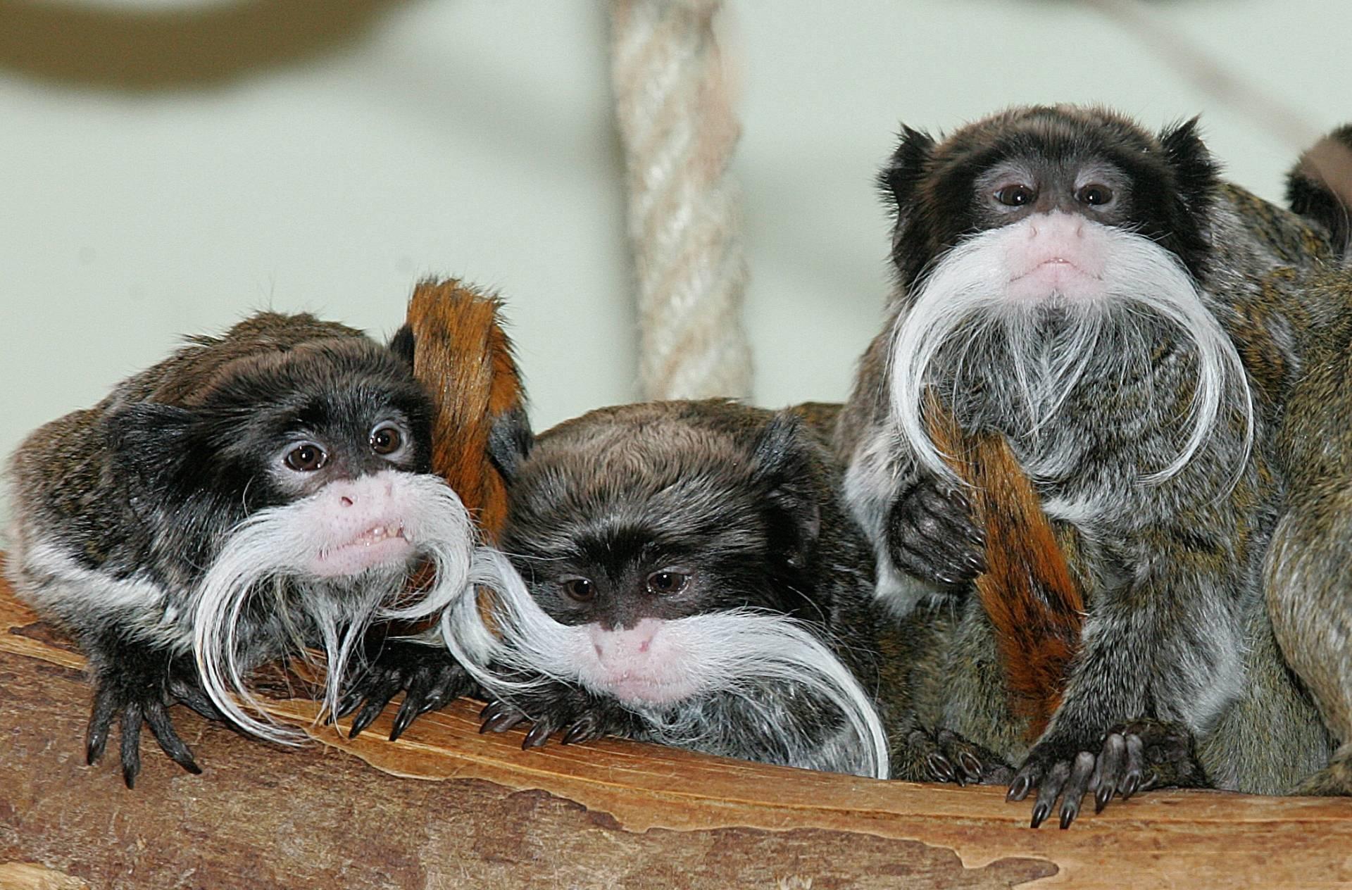 Wilhelma-Zoo