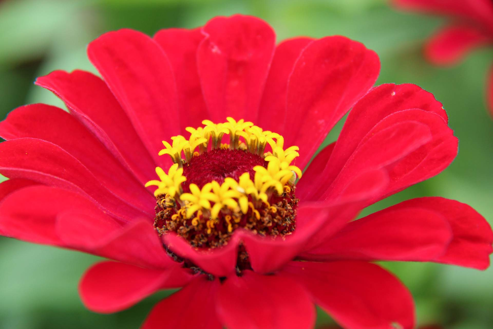 Blumenkorso Zundert