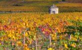 Herbstliches Weinanbaugebiet