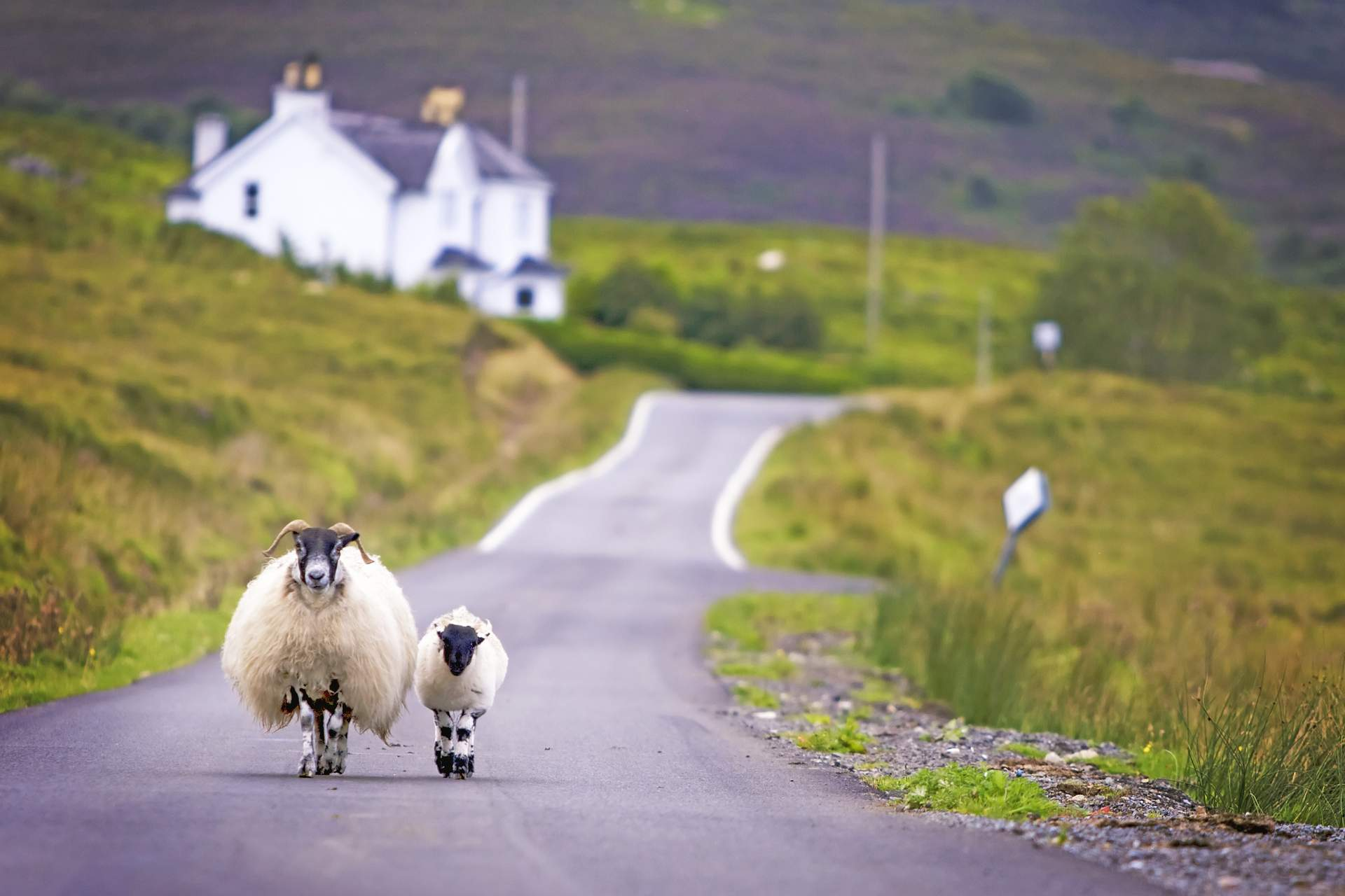 schottische Impressionen