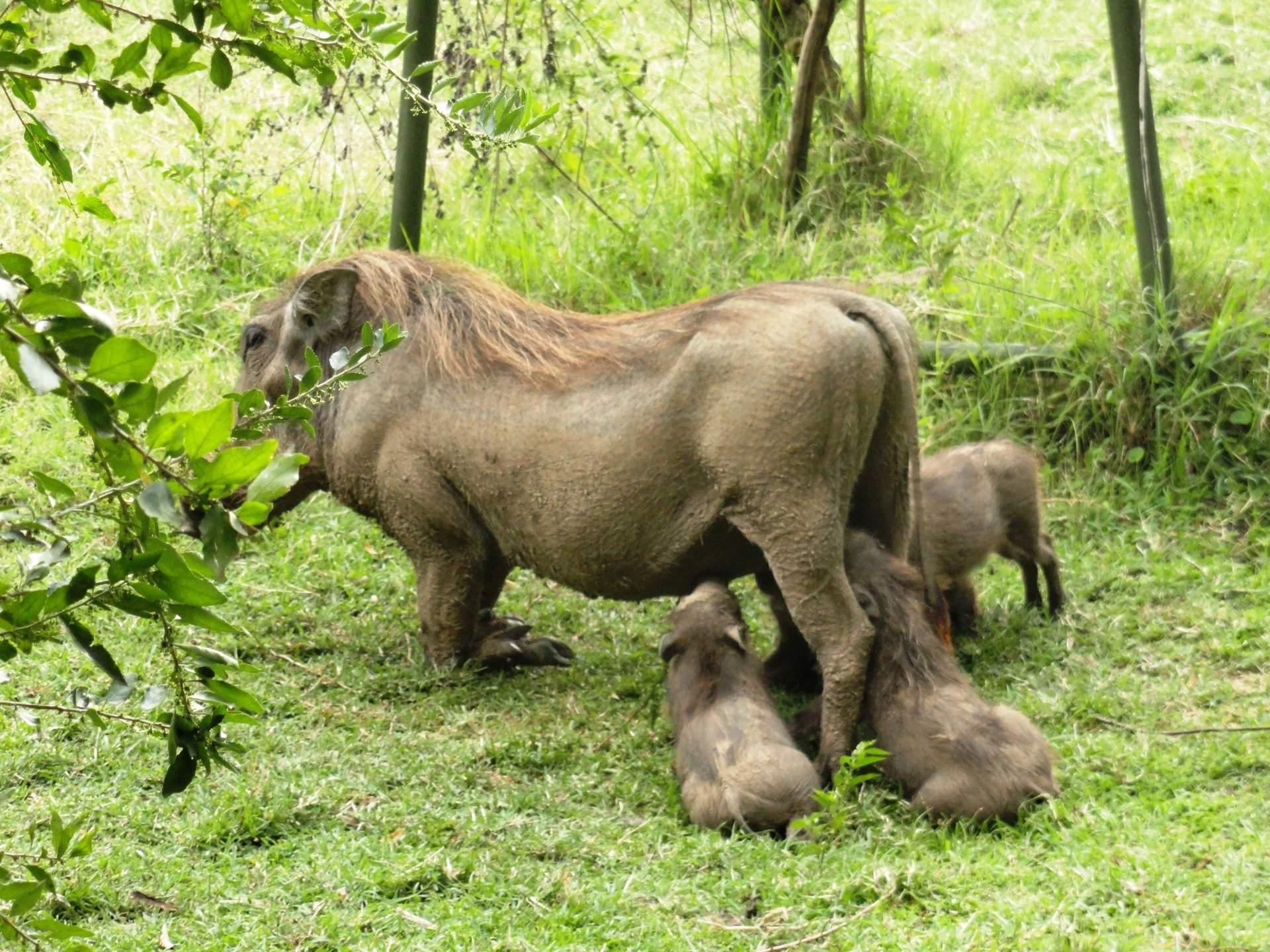 Kenia: Wildtiere