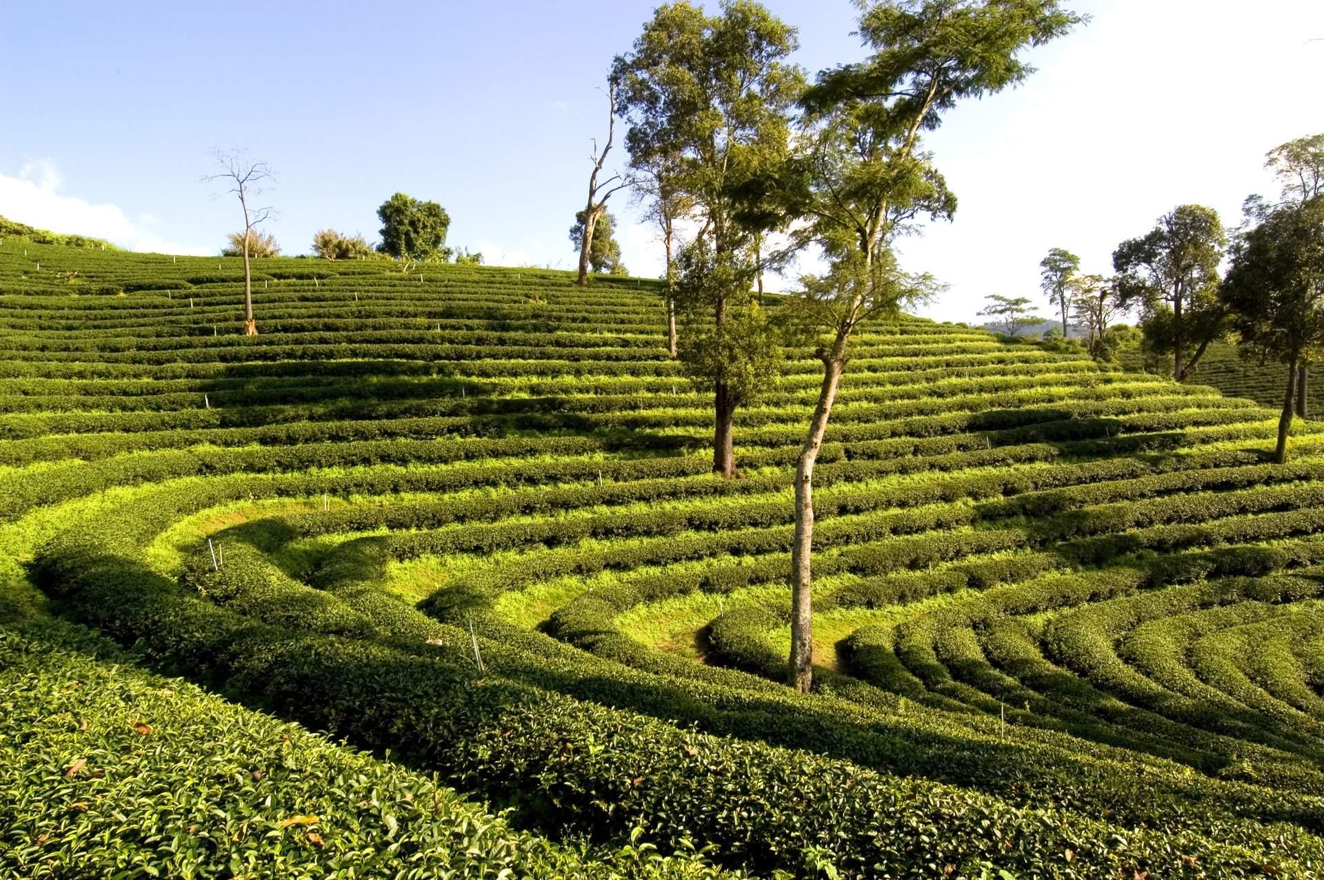 Thailand: Chiang Rai