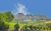 Weinbau in der Kapregion