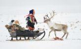 Nordkap: Rentierschlittenfahrt