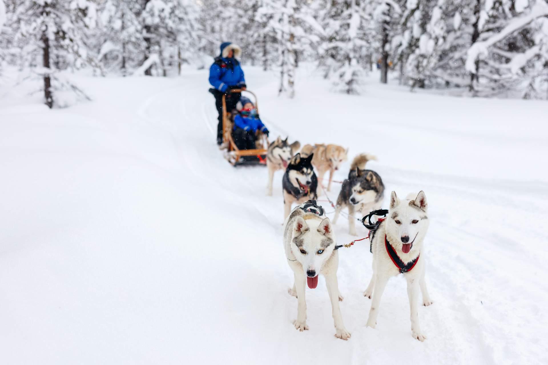 Finnland: Hundeschlittenfahrt