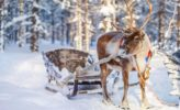 Finnland: Rentiere