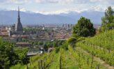 Piemont: Tulpenblüte